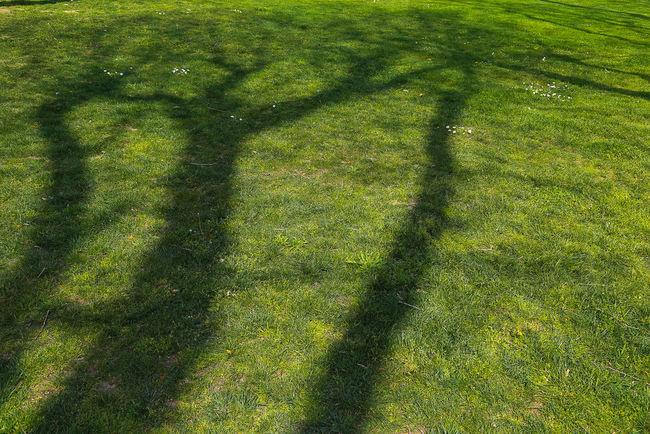 Garden Istanbul Shadow Shady Topkapi Tree