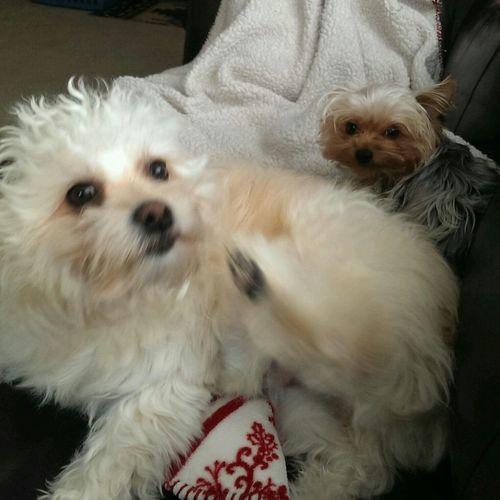 Morning Cuddles !! Cooper! Little Missy