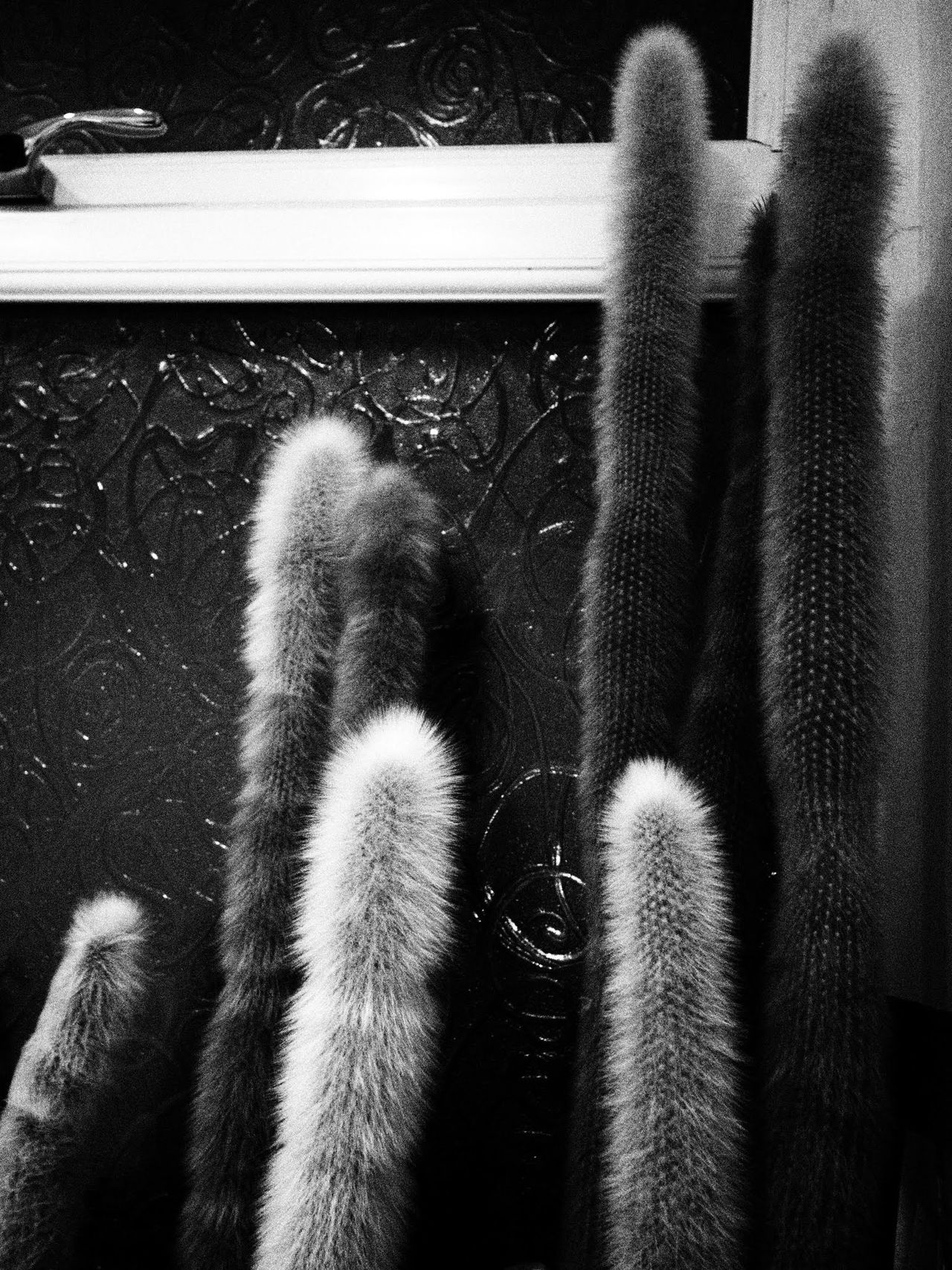 Indoors  No People Cuctases Window Plants Black And White EyeEmNewHere BYOPaper!