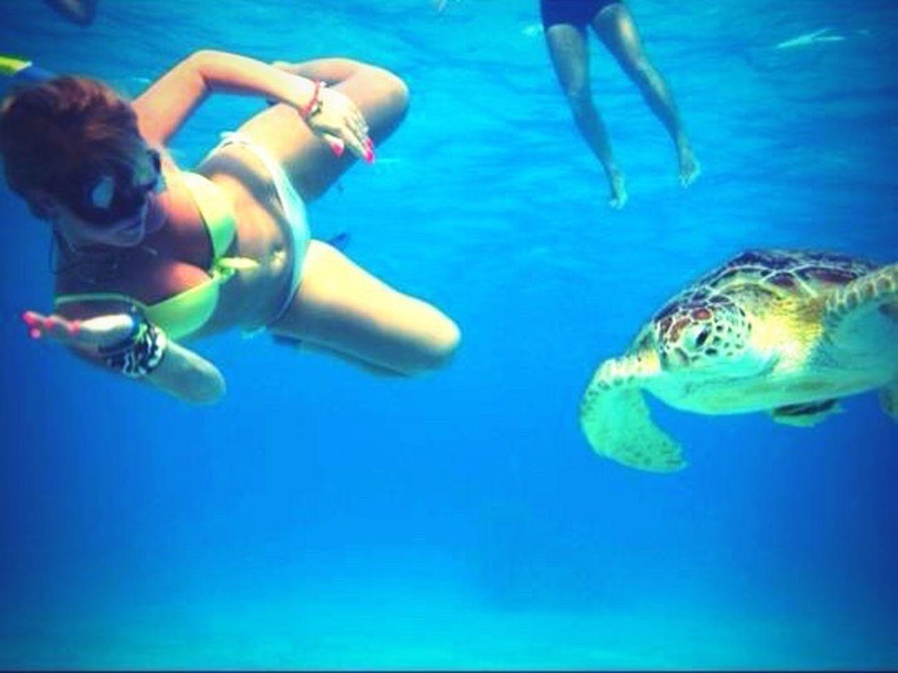 Tartaruga Me :)  Mar Rosso Nuotare Sea Snorkeling Avventura Life Is A Beach Portrait