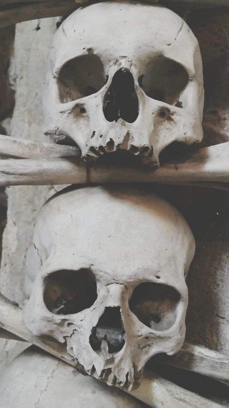 Beautiful stock photos of skull, Auto Post Production Filter, Bone, Close Up, Crossbones