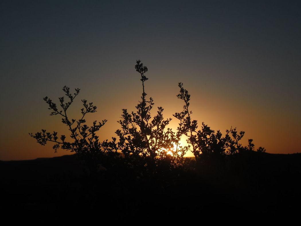 The golden fall Sunset The Calm