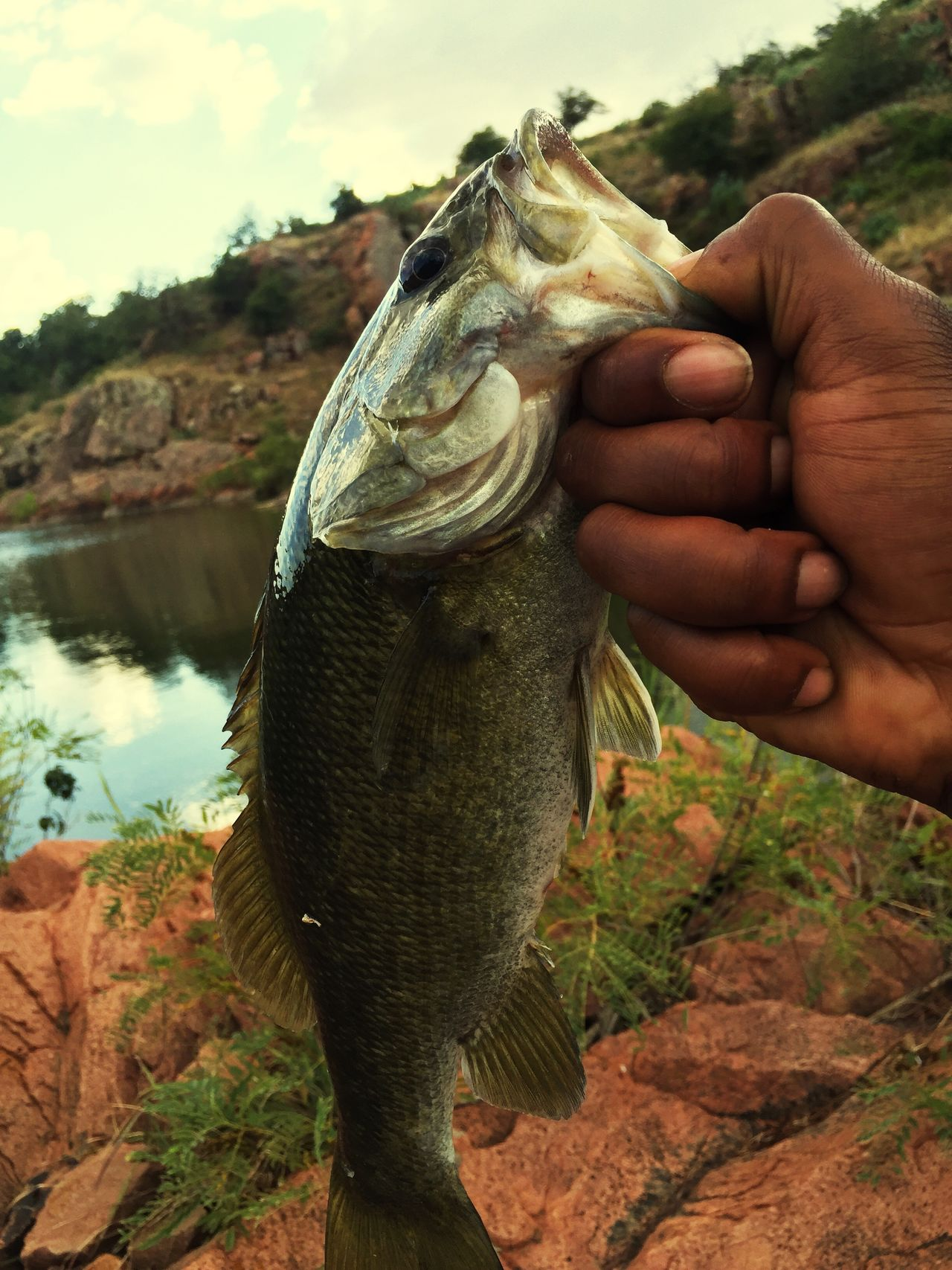Color Palette Oklahoma Largemouthbass Medicine Creek