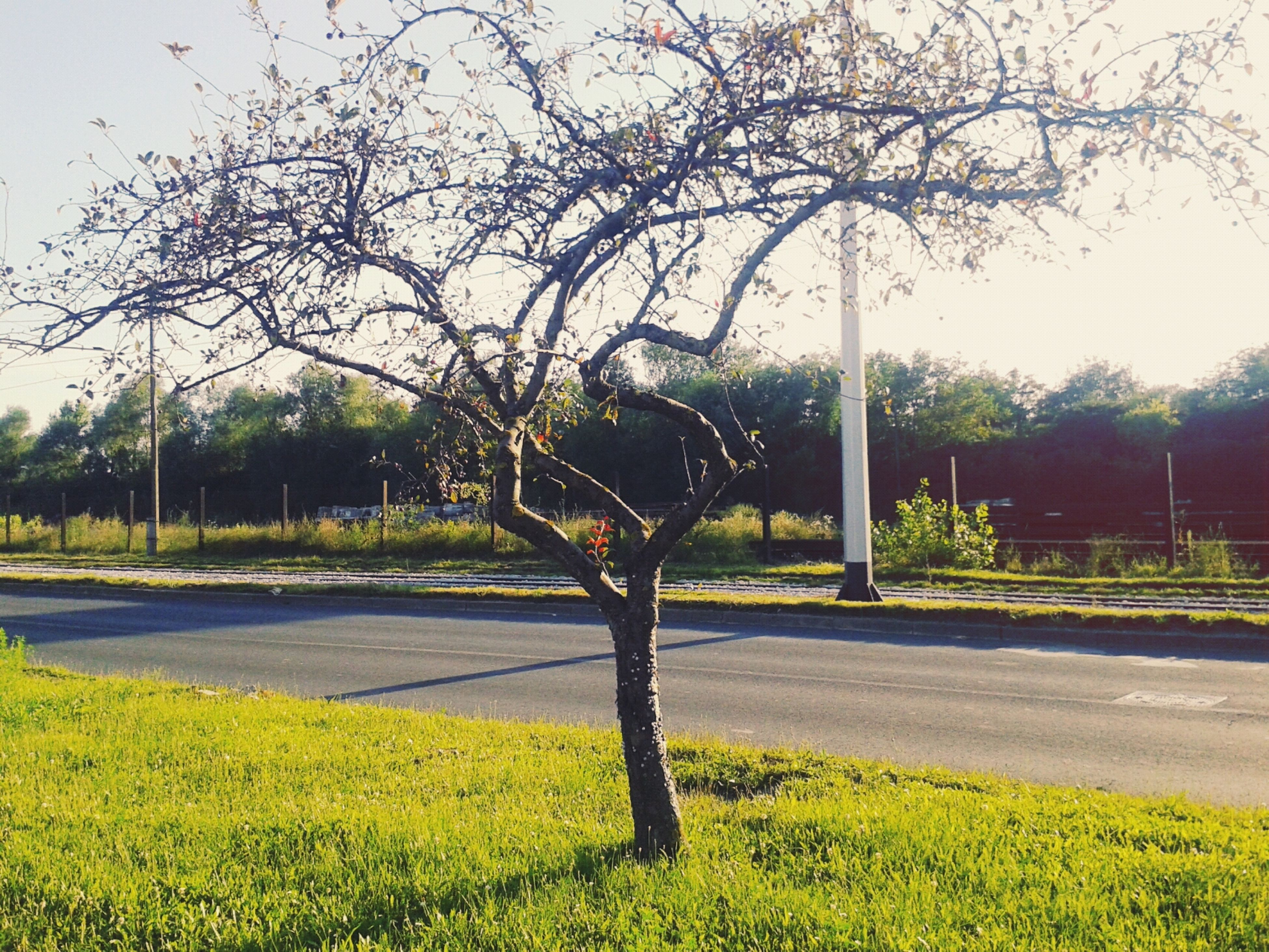 tree, grass, growth, tranquility, yellow, nature, field, tranquil scene, beauty in nature, branch, park - man made space, flower, clear sky, green color, sky, transportation, landscape, day, plant, road
