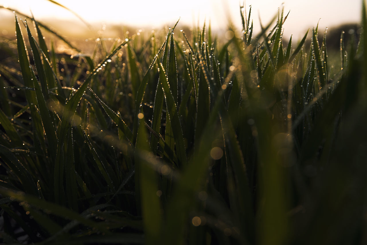 Wet Grass On Field