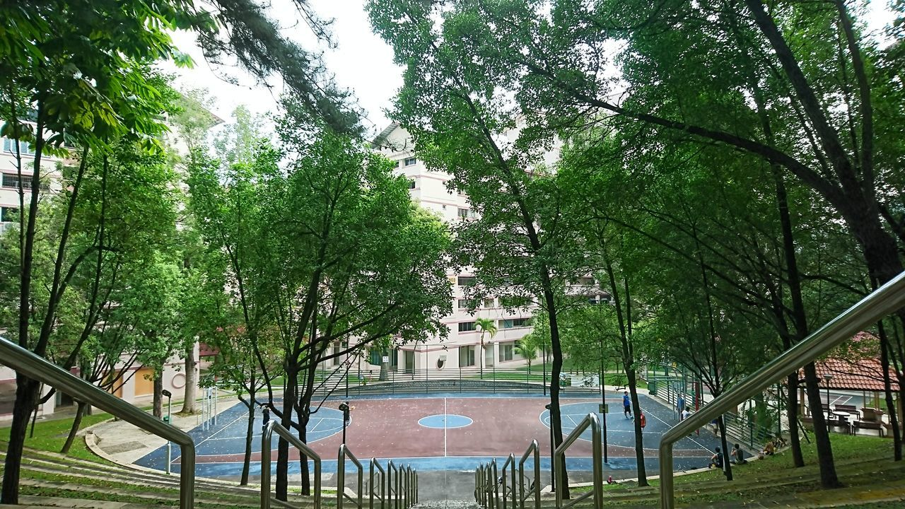 Tree Growth Nature Outdoors Green Color Sky Architecture Basketball Game Basketball Ballgames Ballgame With Girlfriend. Love Her Early Morning