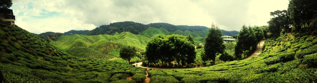 Panorama2 Tea Is Healthy Vacation Malaysia Vscocam