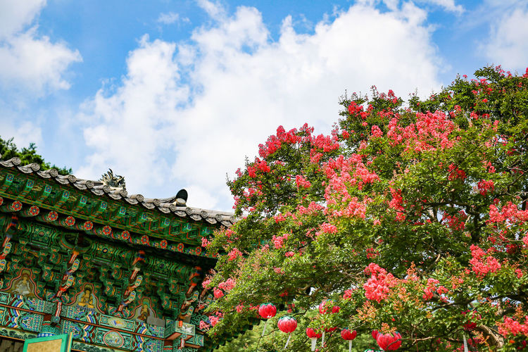 Korea Architecture Beauty In Nature Buddist Temple Building Exterior Built Structure Cloud - Sky Day Flower Freshness Growth Hwasun Lotus Lantern Low Angle View Manyeon Nature No People Outdoors Plant Red Roof Sky Tree
