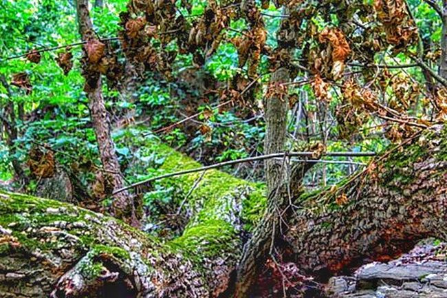 Fallen Tree Ecosystem  Life After Death Moss Lichen Beauty In Nature Naturelovers Nature Photography WoodLand Textures And Surfaces