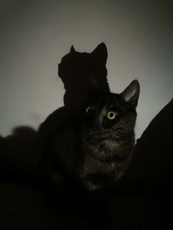 Cat No People Indoors  Night🌛