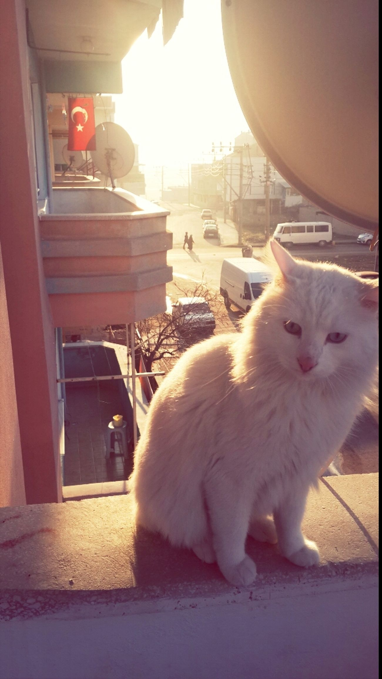 My Cat :) Animals Cat Pamuk