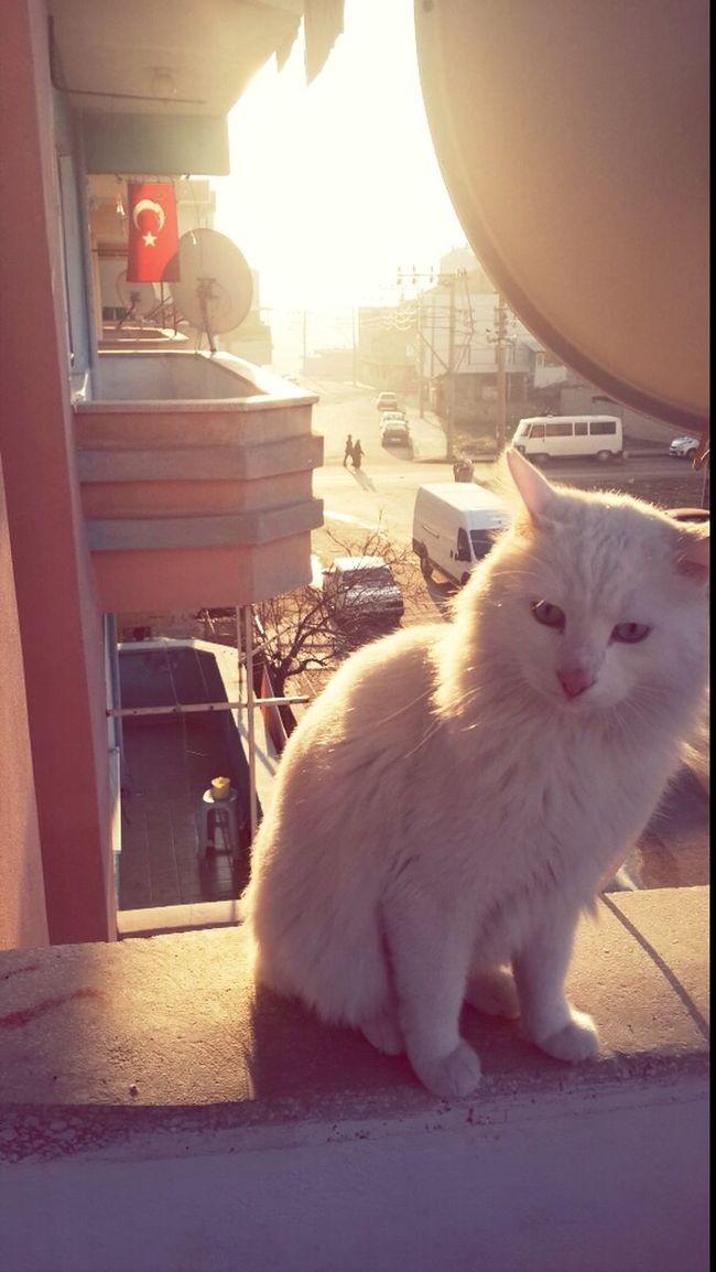 My Cat :) Animals Cat Pamuk