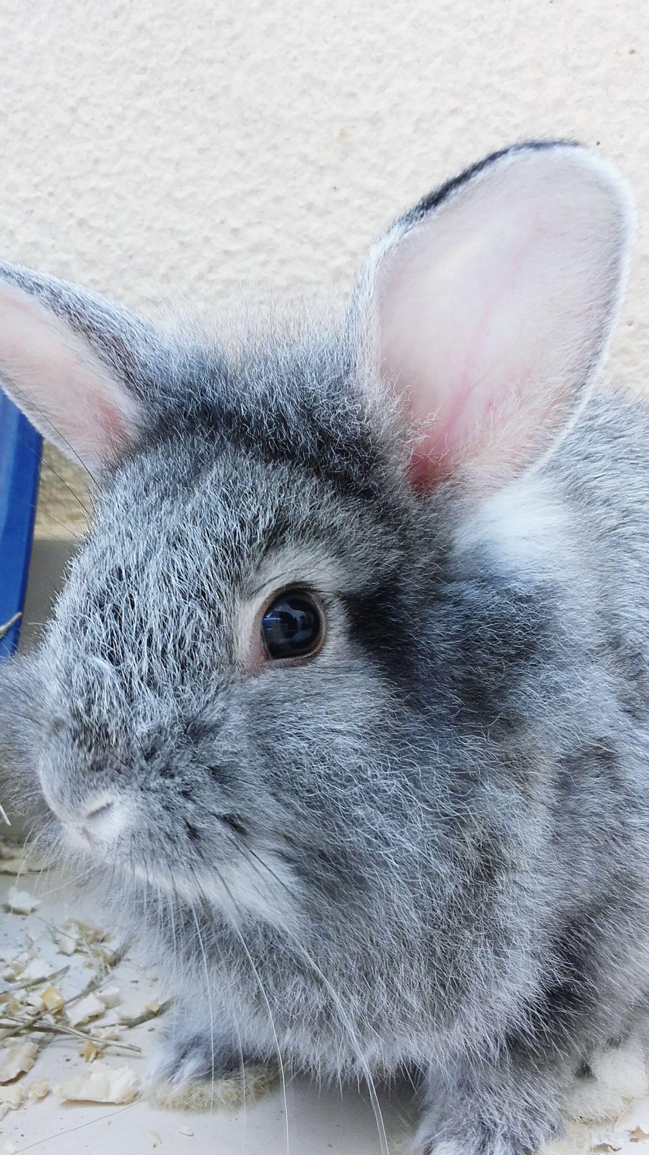 Rabbit ❤️ Rabbits 🐇 Rabbits Animals Animal_collection