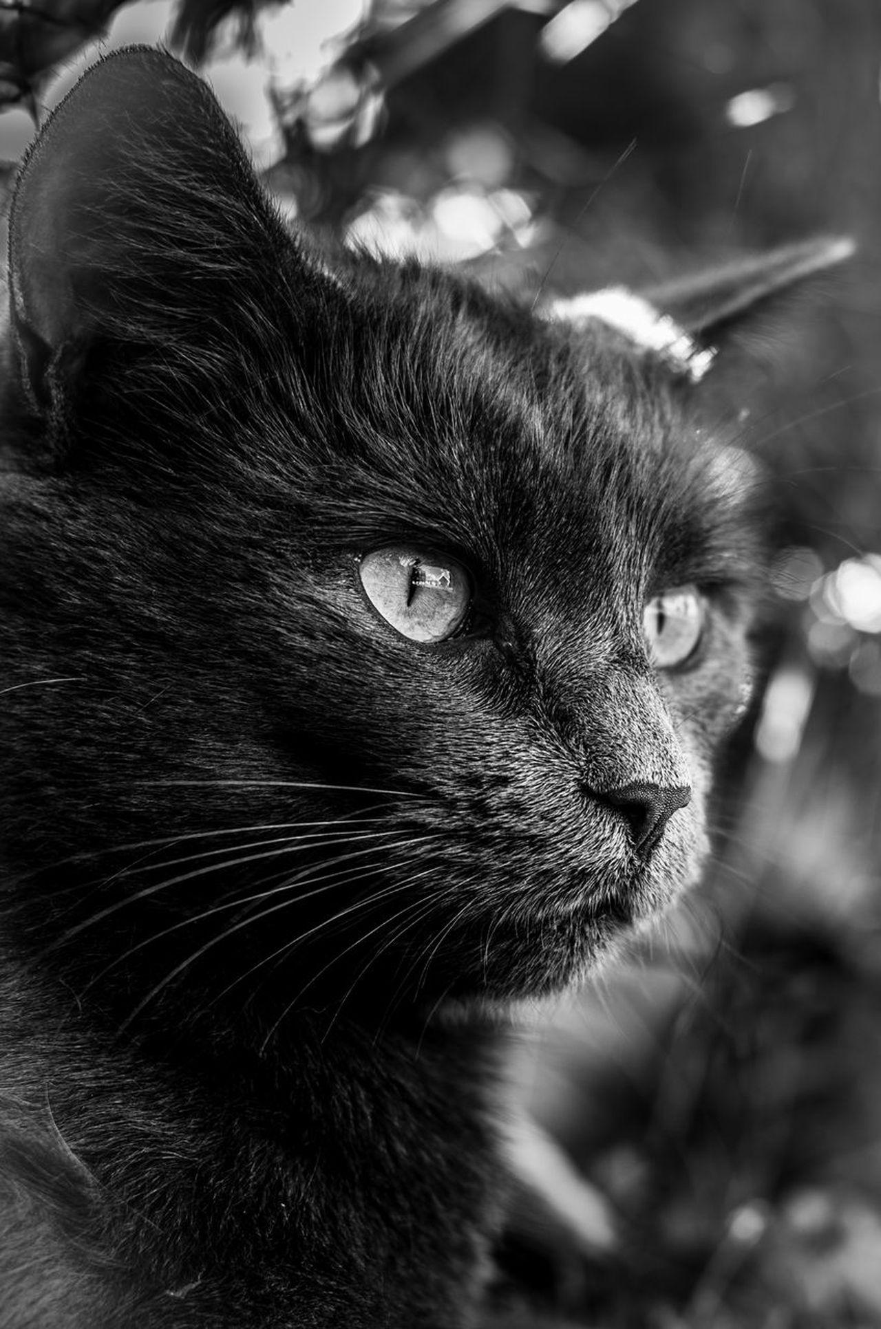 This Is Doris Cat 1cuteshadeofgrey Black And White Blackandwhite Pentax K5ll
