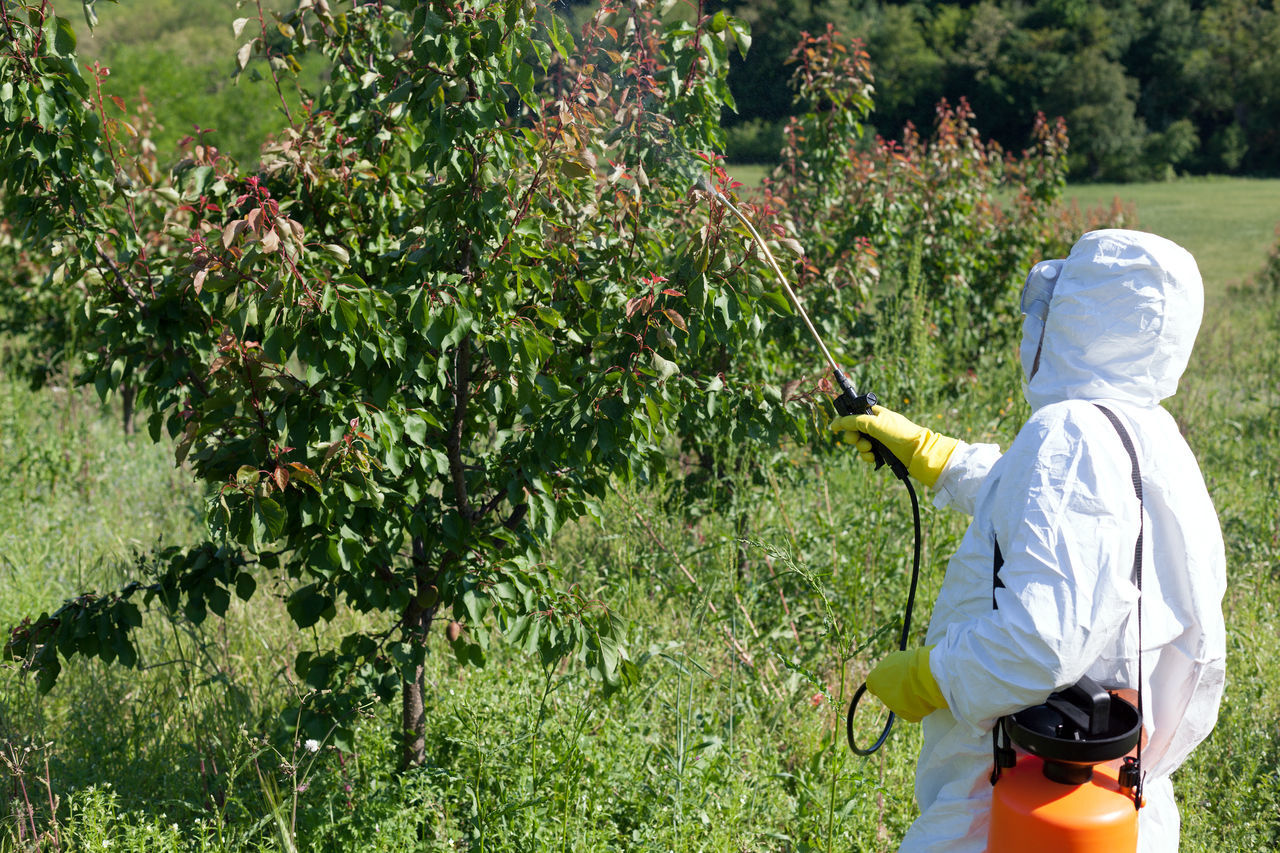 Man spraying toxic pesticides or insecticides in vegetable garden Adult Chemical Day Farm Farmer Fertilizer Field Glove Grass Green Growth Health Men Nature Non Organic Nozz Outdoors Protective Suit Rear View Spraying Tree Vegetable Vegetables