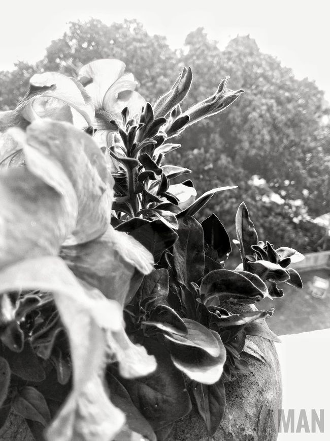 Flowers In Black & White Flower Petal Shade Flower Pot Backgrounddefocus Blackandwhite Photography Loved This Shot Fresh On Eyeem  Outdoors Bright Daylight Learned From Eyeem Tutorial Taken By Me With Smartphone