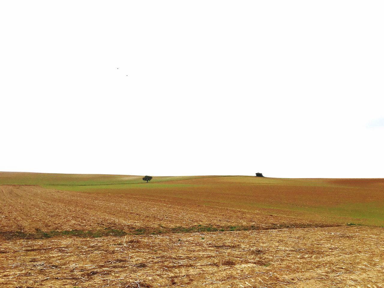 Landwirtschaft German Countryside Agriculture Field Fields Felder Im Herbst Fields In Autumn Fields In Fall Autumn Fields Harvested Harvested Field