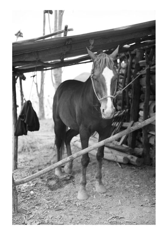 Horse Domestic Animals Animal Themes Mammal Livestock Herbivorous Working Animal No People Outdoors Sky Day Nature Architecture Myanmar