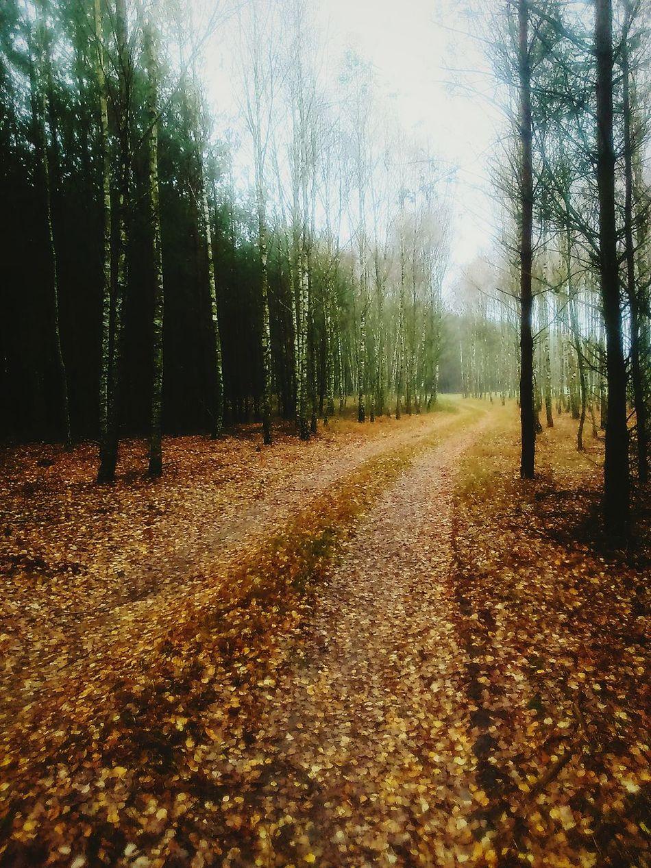 Jesiennie... First Eyeem Photo