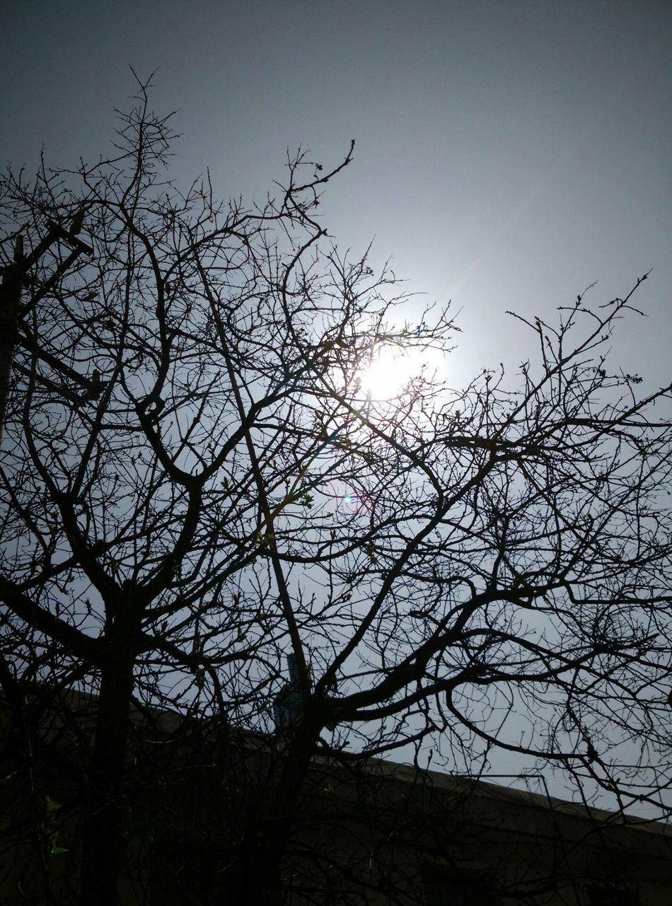 Tree Bare Tree Branch Nature Low Angle View Bird Beauty In Nature Outdoors Silhouette Sky No People Day Animals In The Wild Tree Area Flying Animal Themes Vulture Bird Of Prey