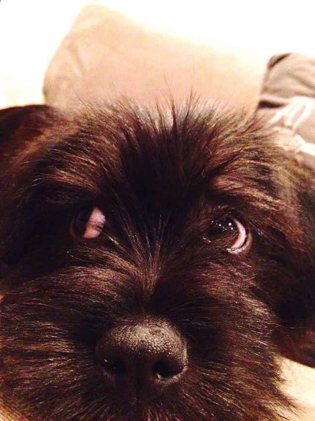 Billy Puppy Love A Girls Bestfriend