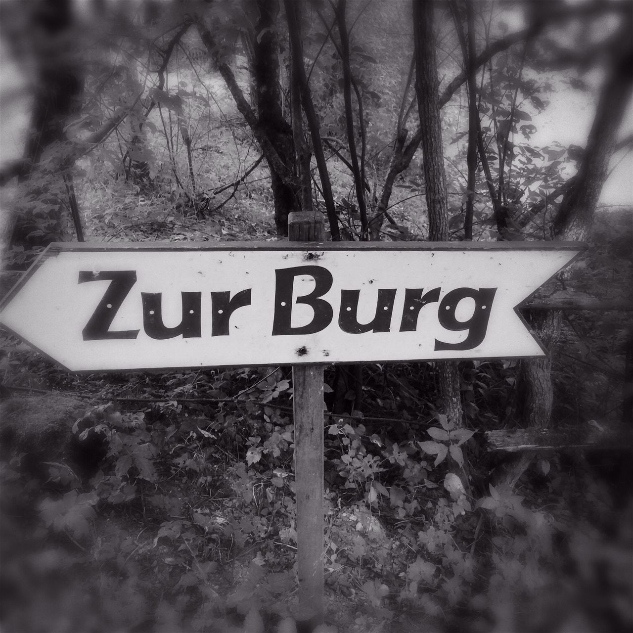 Directional Sign In Forest