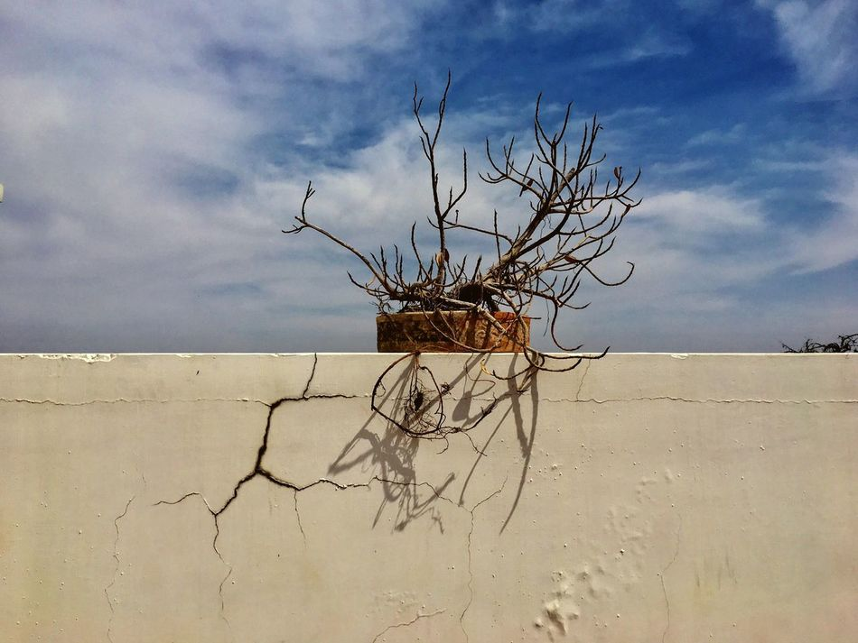 Nature Sea Sky Water Cloud - Sky Beauty In Nature Bare Tree Scenics Branch No People Beach Horizon Over Water Tree Tranquil Scene Outdoors Day Sand Dried Plant Dead Tree