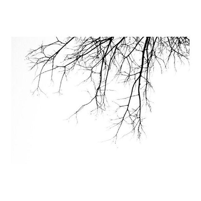 בסוף של יום אחרי הכל נאמר שלום ובינתיים... Abstract Igminimal Monochrome Lookabove lookingup minimalism minimalobsession nature_lovers insta_bw instanature linedesire bwcenter blackandwhite blackandwhiteonly bnw_society bwstyles_gf bestoftheday only_greyscale monoart artphoto_bw ig_israel statigram primeshots all_shots