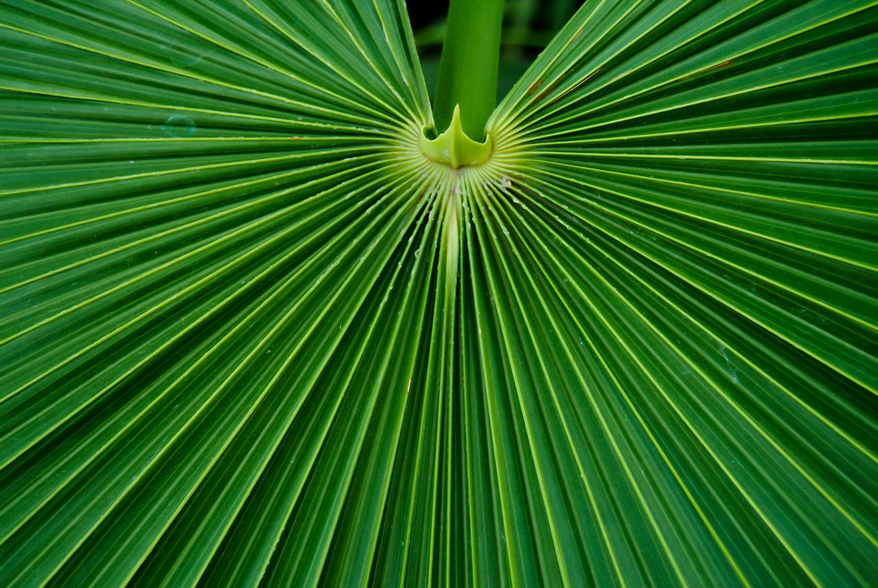 Botanischer Graten, Berlin Backgrounds Beauty In Nature Close-up Freshness Full Frame Fächerpalme Grafisch Green Green Color Grunge Leaf Mexican Fan Palm Palm Tree Plant