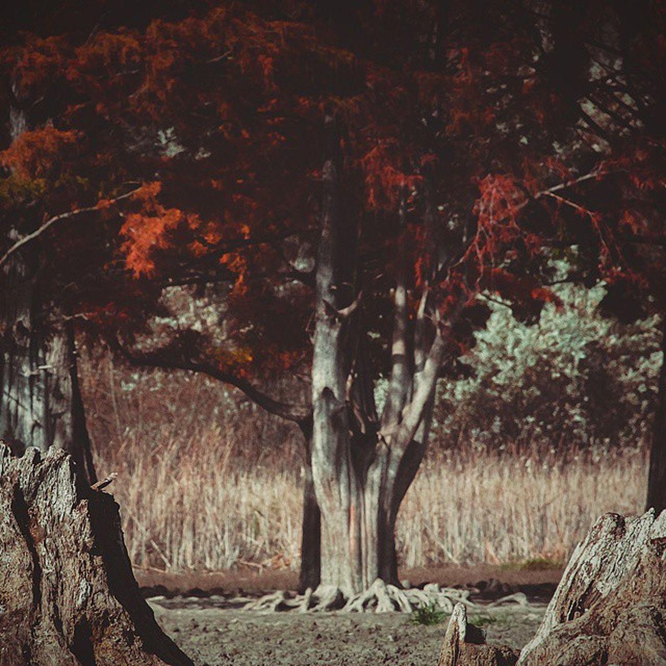 Сквозь время⏳🍁 (болотныекипарисы на озере в пос. Сукко ) Wigandt_photo Wigandtphoto Wigandt Sonyalpha Minolta Russia Россия Анапа Anapa Photorussia TravellingRussia