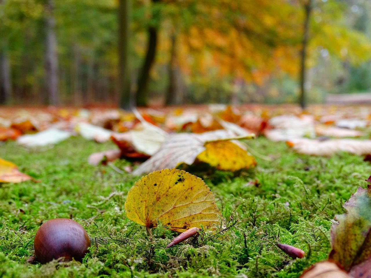 Surface Level Of Autumnal Leaves On Grassland