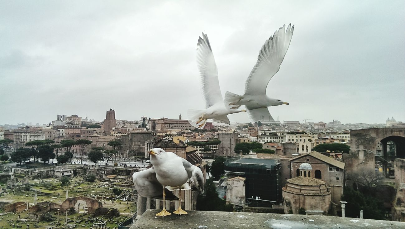 Rome Italy Pricelessmoments  Birds In Flight Enjoying The View Natural Beauty Winter Landscape Naturelovers Animal Love Taking Photos