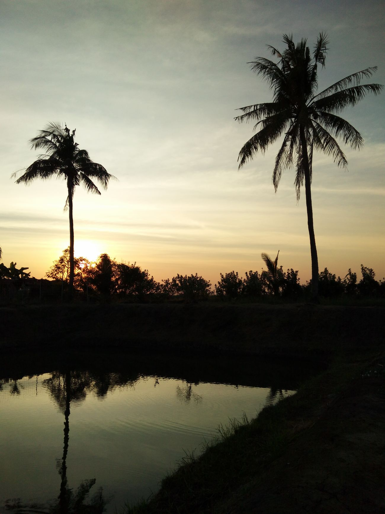 Sunset Water Tree Nature Travel Sky Coconut Trees Growth RASTA Beauty In Nature Rastaman Agriculture Nature Tree Rastafari Outdoors