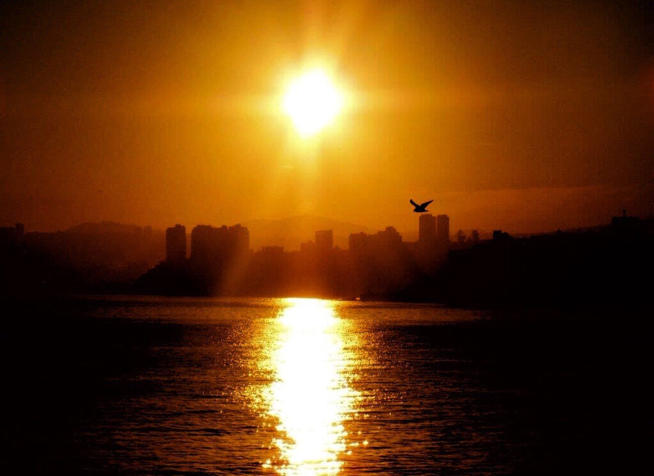 Morning Sunrise Sunrise Silhouette Sunrise_Collection Sunrise Reflection Orange Sunrise Sun Rays Sun ☀ Sun Reflection On Water Sun And Silhouettes Bird In Flight From My Lens Outdoors Beauty In Nature