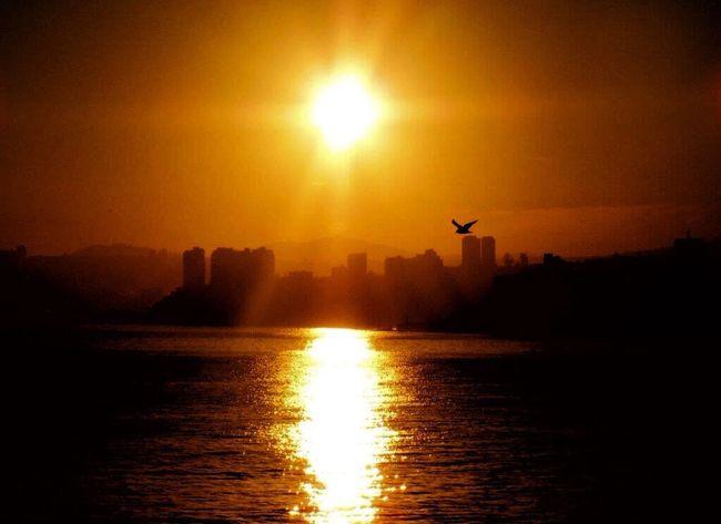 Morning Sunrise Sunrise Silhouette Sunrise_Collection Sunrise Reflection Orange Sunrise Sun Rays Sun ☀ Sun Reflection On Water Sun And Silhouettes Bird In Flight From My Lens Outdoors Beauty In Nature