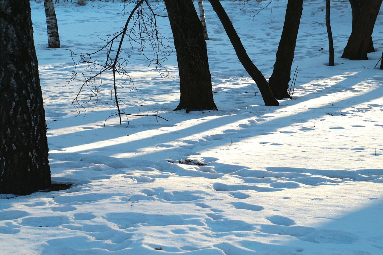 Beautiful stock photos of moscow, Snow, bare Tree, beauty In Nature, cold
