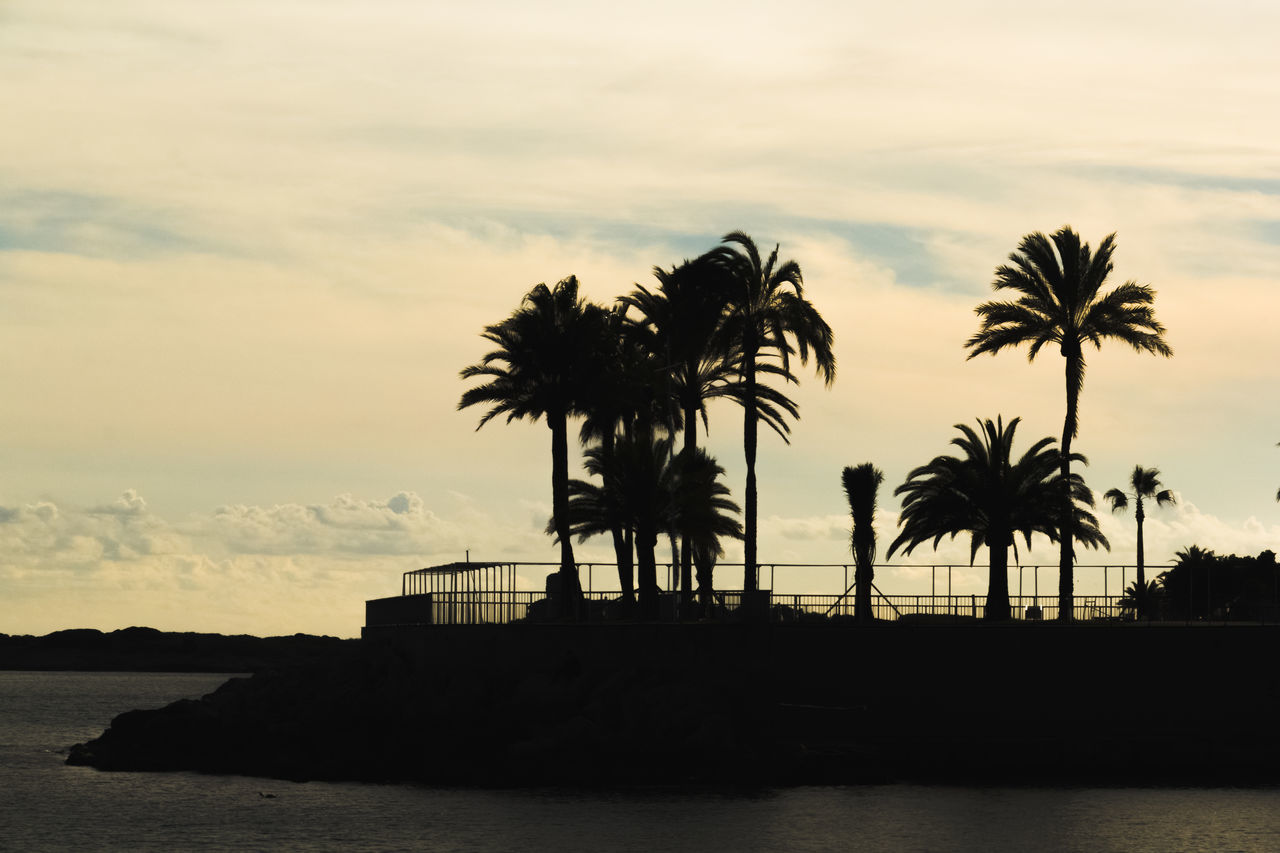 palm tree silhouettes Beach Beauty In Nature Cloud - Sky Day Horizon Over Water Nature No People Outdoors Palm Tree Palma De Mallorca Scenics Sea Silhouette Sky Sunset Tranquil Scene Tranquility Tree Water