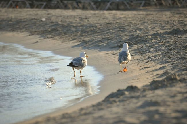 Showcase: February Seagulls On The Beach Observing Summertime Walking Around Natural Beauty