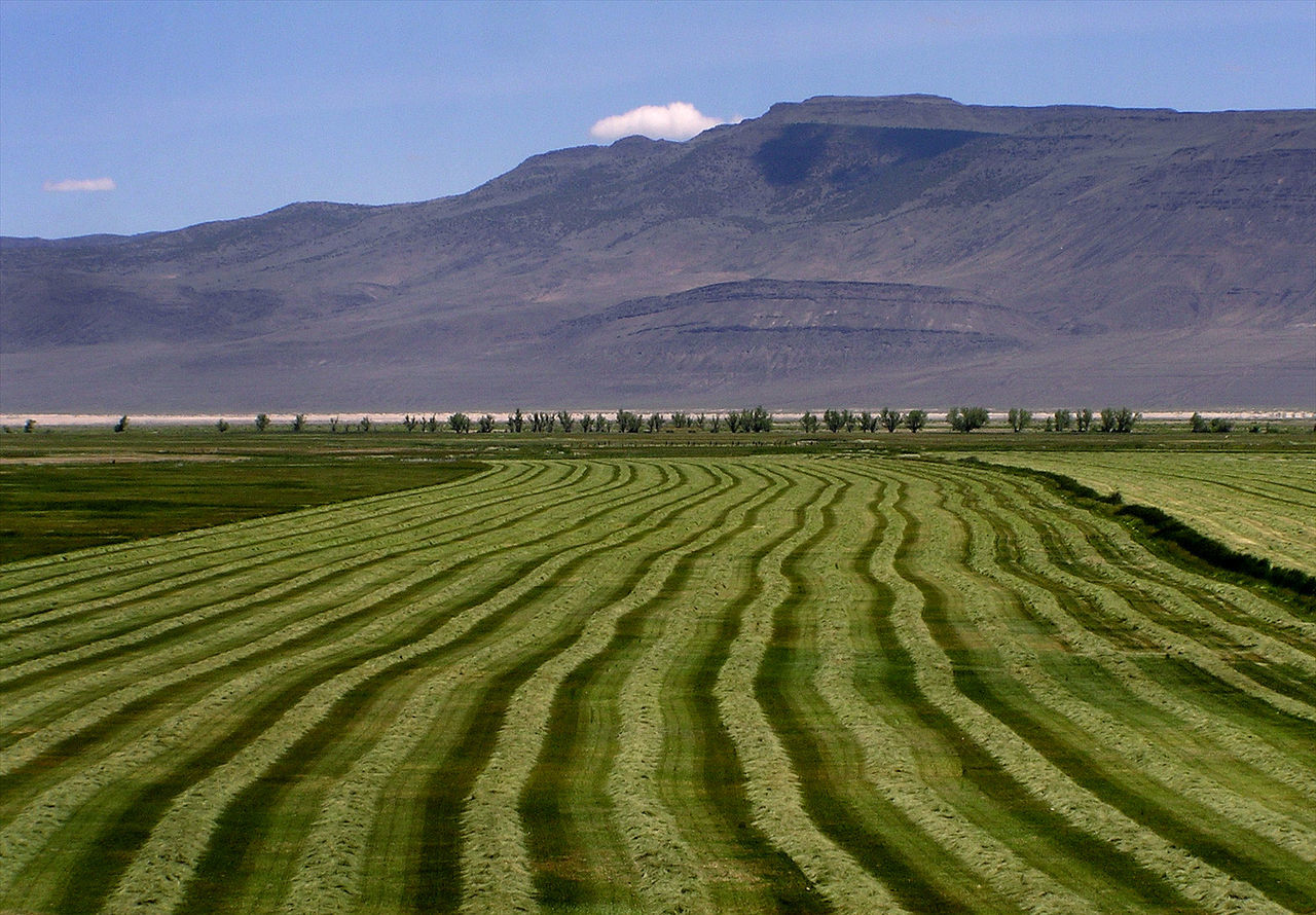Harvest Time Agriculture Alfalfa Field Beauty In Nature Day Eagleville Field Green Harvest Landscape Modoc County Mountain Mountain Range Nature No People Outdoors Rows Rural Scene Scenics Shades Of Green  Sky Surprise Valley Road Tranquil Scene Tranquility
