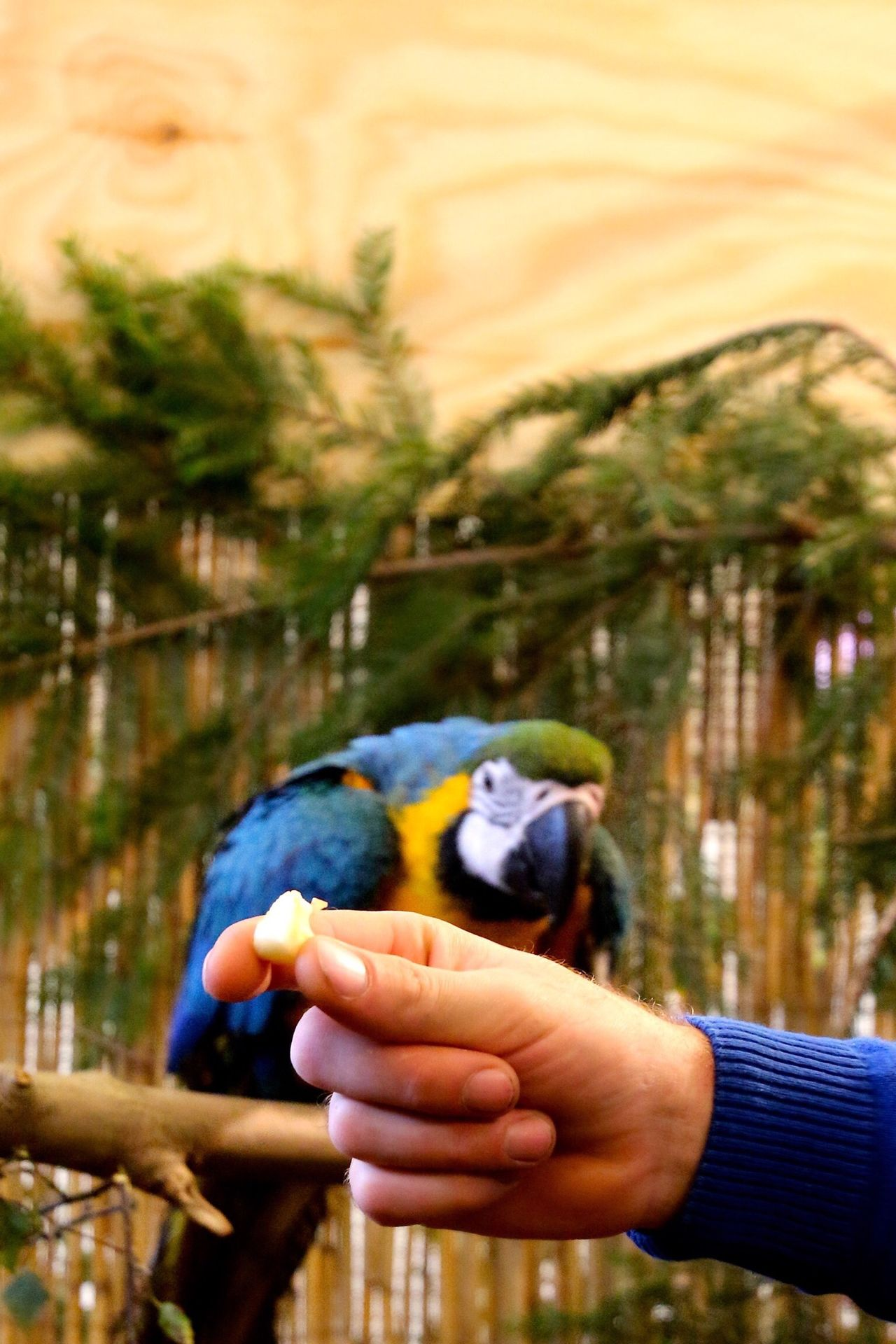 Beautiful stock photos of parrot, Animal Themes, Animals In The Wild, Beauty In Nature, Bird