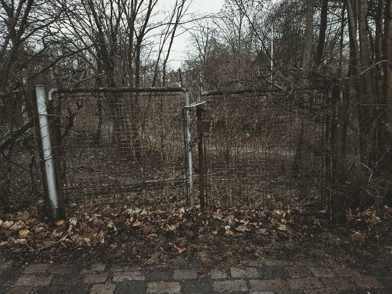 Wasteland pt I Tree Nature Day Metal No People Outdoors Sky Simple Photography Taking Pictures Denmark Wasteland Locked Gate Dark Winter Gloomy Gloomy Day Gloomy Weather Trees Leaves Fall Leaves Fallen Leaves Barren Barren Trees