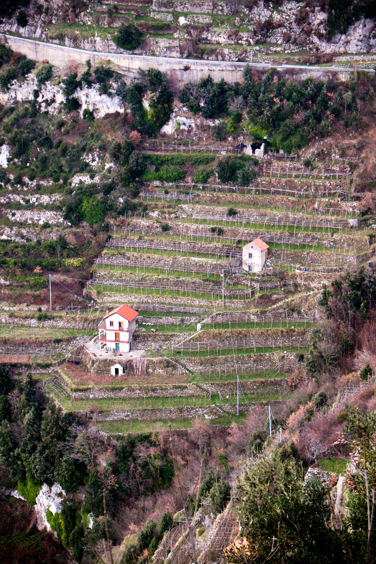 Agerola Amalfi Coast Amalfi Italy Architecture Building Exterior Day Grape Grapevine Grapevines  High Angle View History Nature No People Outdoors Springtime Steep Steep Hill Steep Hillside Terraced Field Walking Walking Holiday Wine Growing