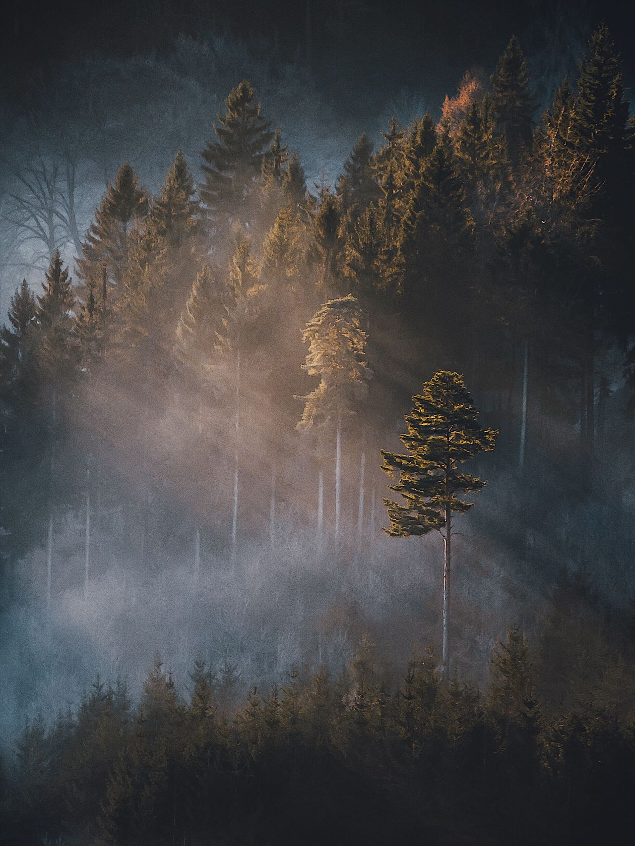 Tree Nature Growth No People Beauty In Nature Tranquility Scenics Sky Outdoors Tranquil Scene Forest Fog Day