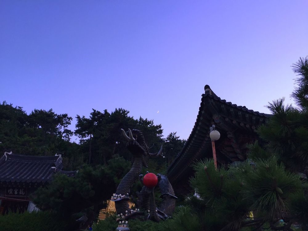 Taking Photos Korean Temple Architecture Dragon Trees Sunset Crescent Moon Moon IPhoneography