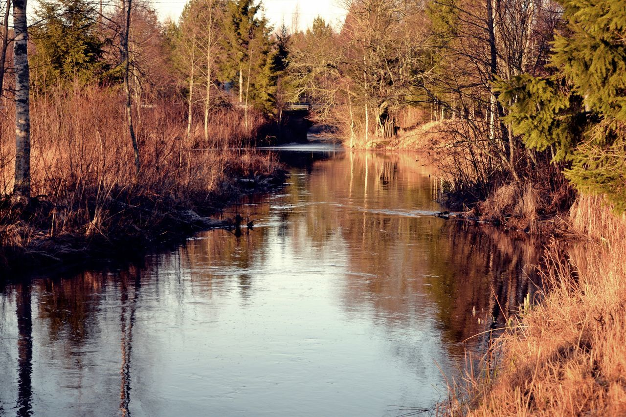 Finland Nature #backhome #Christmas #river #trees Outdoors River Water