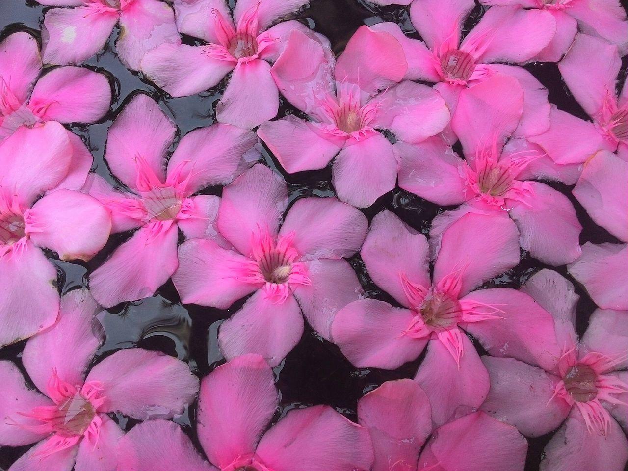 Enjoying Life Pattern No People Flowers Oleander Flowers Water