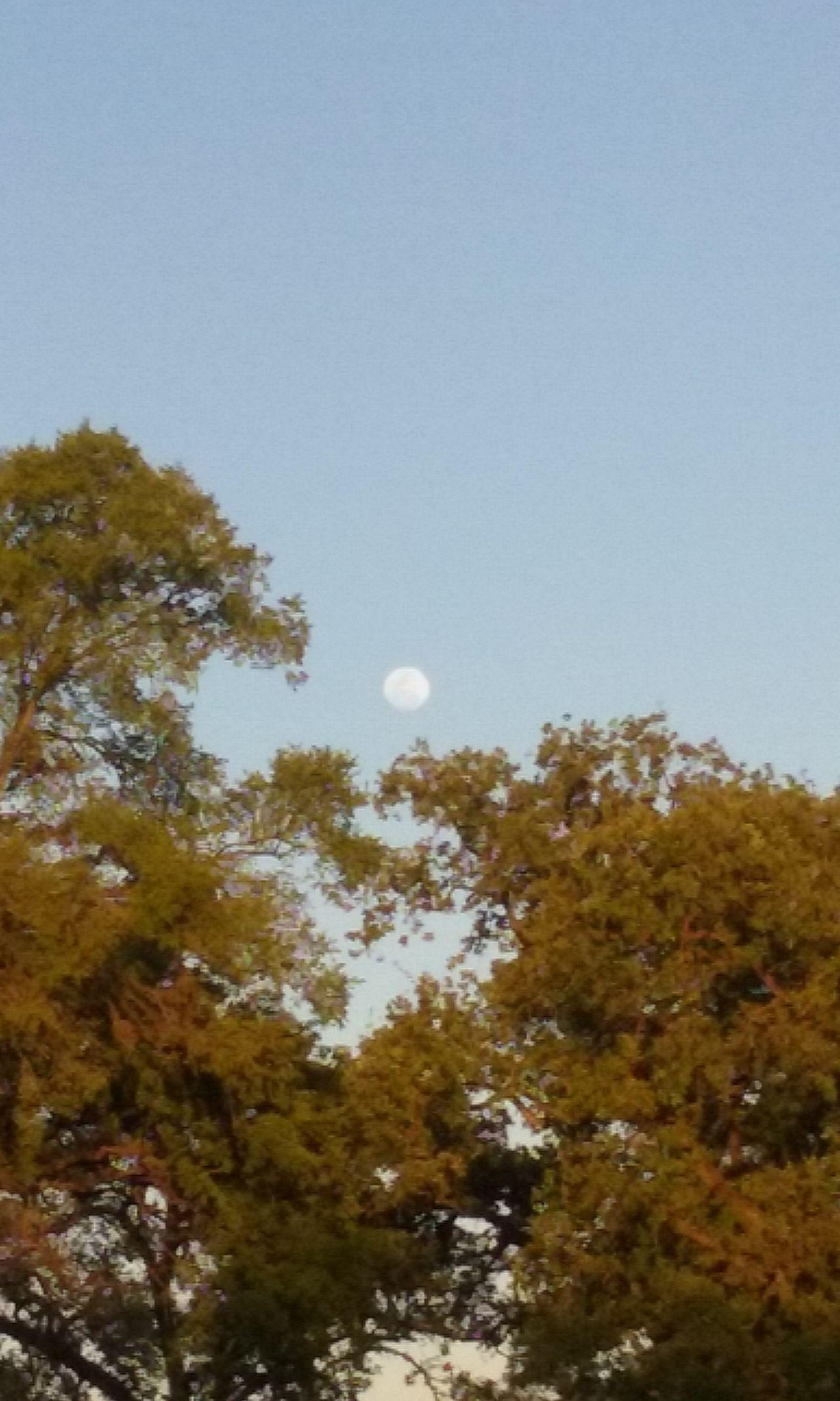 Moon Moon Shots Moon_collection Moonphotography Sunset Sunset_collection Sunset✨trees✨ Trees And Sky Trees And Moon Treescollection Trees Collection Trees! Android Photography Taking Photos Exterior Outdoor Photography