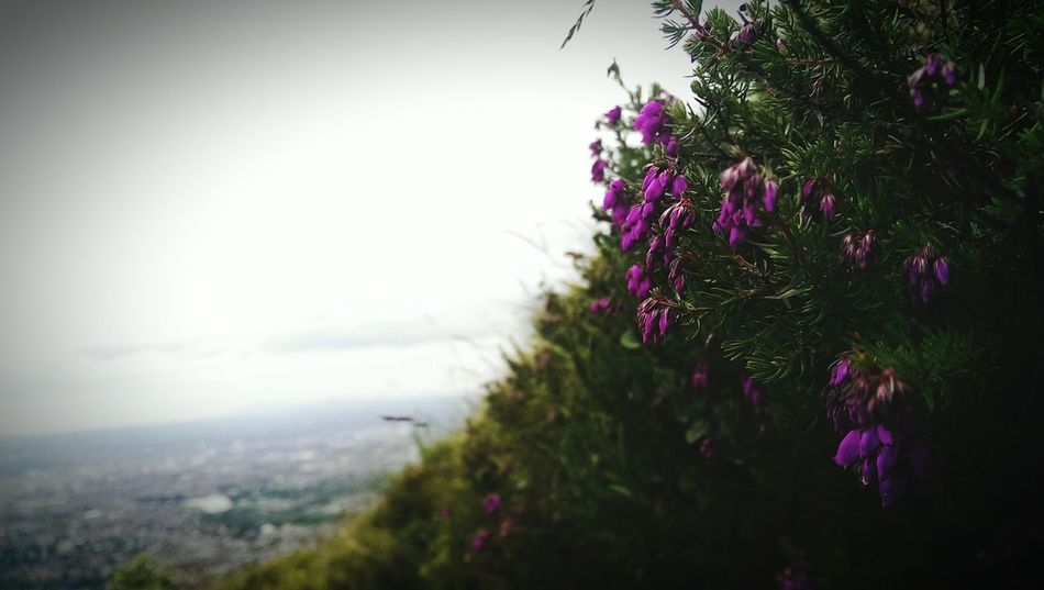 Belfast Cavehill Taking Photos HTC_photography EyeEm Nature Lover Close-up Photography Beautiful EyeEm United Kingdom Enjoying Life Check This Out