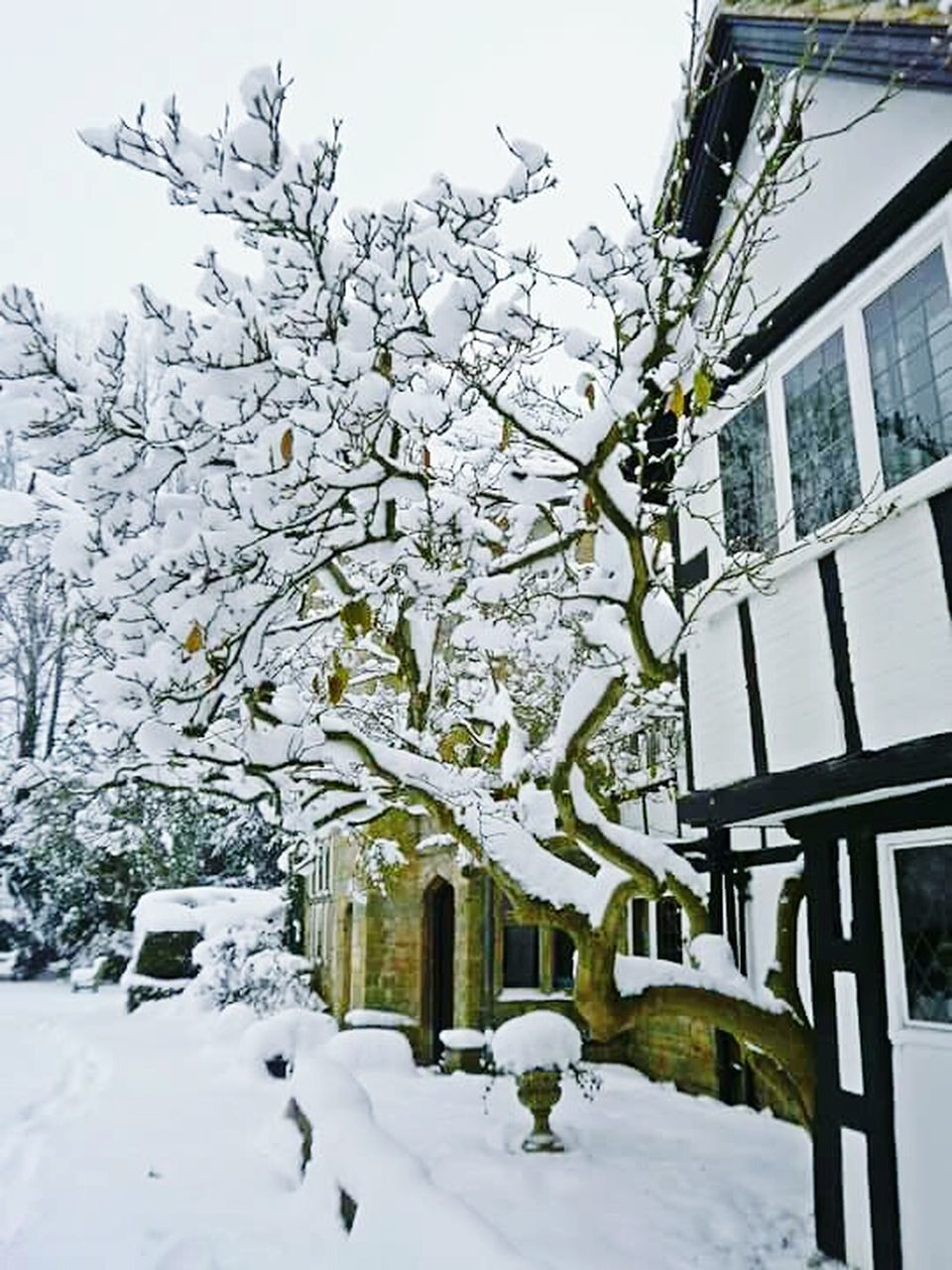 snow, winter, cold temperature, building exterior, architecture, white color, nature, outdoors, built structure, no people, day, beauty in nature, tree, sky