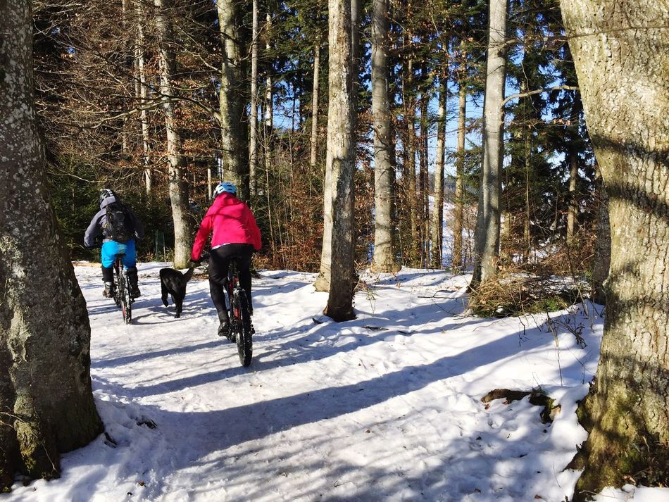 Winter activities Mountain Biking Mountain Biker Activity Winter Forest Bike Trail Trail Winter Time People Swiss Mountains Switzerland